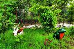 جاجیگا - اجاره ویلا در تنکابن