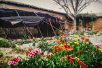 جاجیگا - اجاره اقامتگاه در فارس