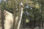 جاجیگا - رزرو اقامتگاه در یزد