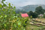 جاجیگا - اقامتگاه بومگردی بهشهر