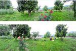جاجیگا - خانه روستایی اجاره ای شمال