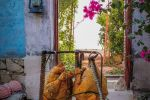 جاجیگا - اجاره اقامتگاه در بوشهر